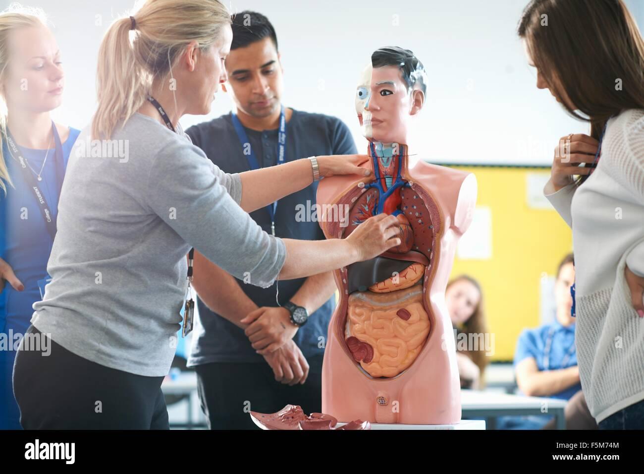 Dozent im Gespräch mit Studenten in der menschlichen Anatomie Klasse ...