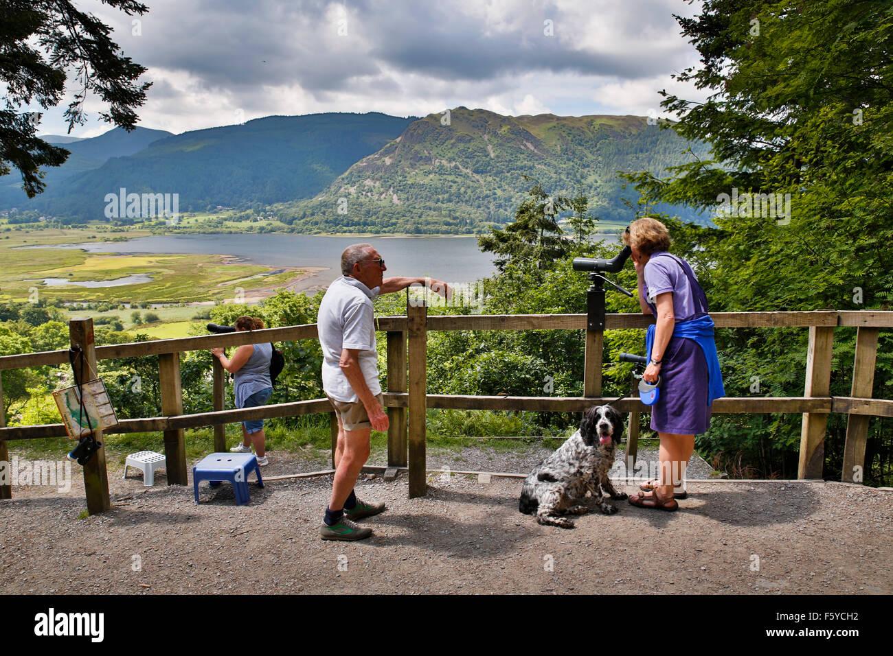 Dodd Holz; Osprey View Point; Bassenthwaite; Cumbria; UK Stockbild