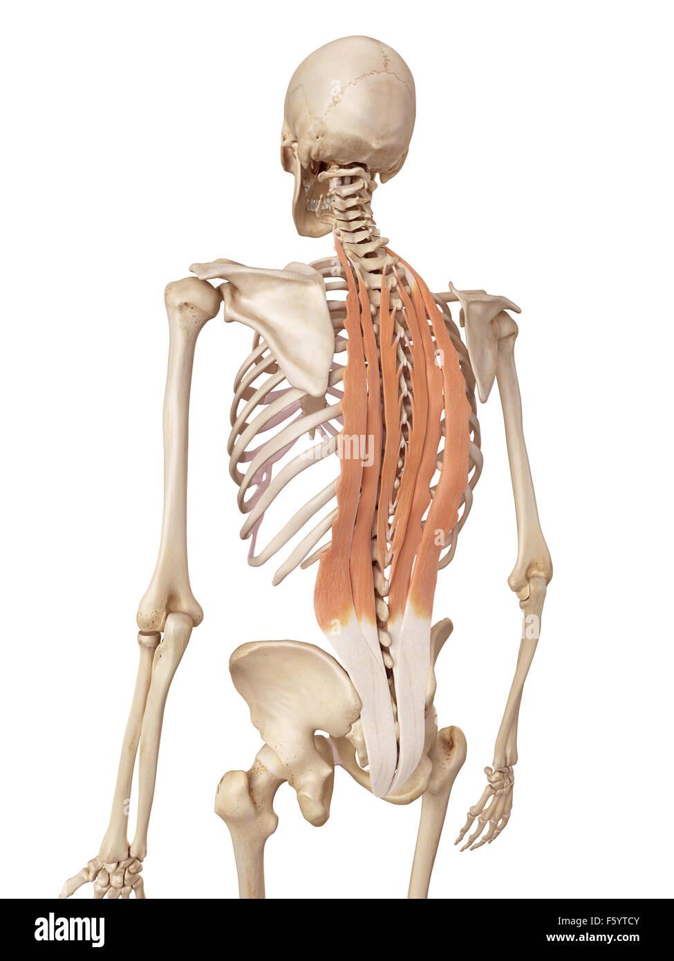 Groß Was Bedeutet Rücken In Der Anatomie Bilder - Anatomie Ideen ...