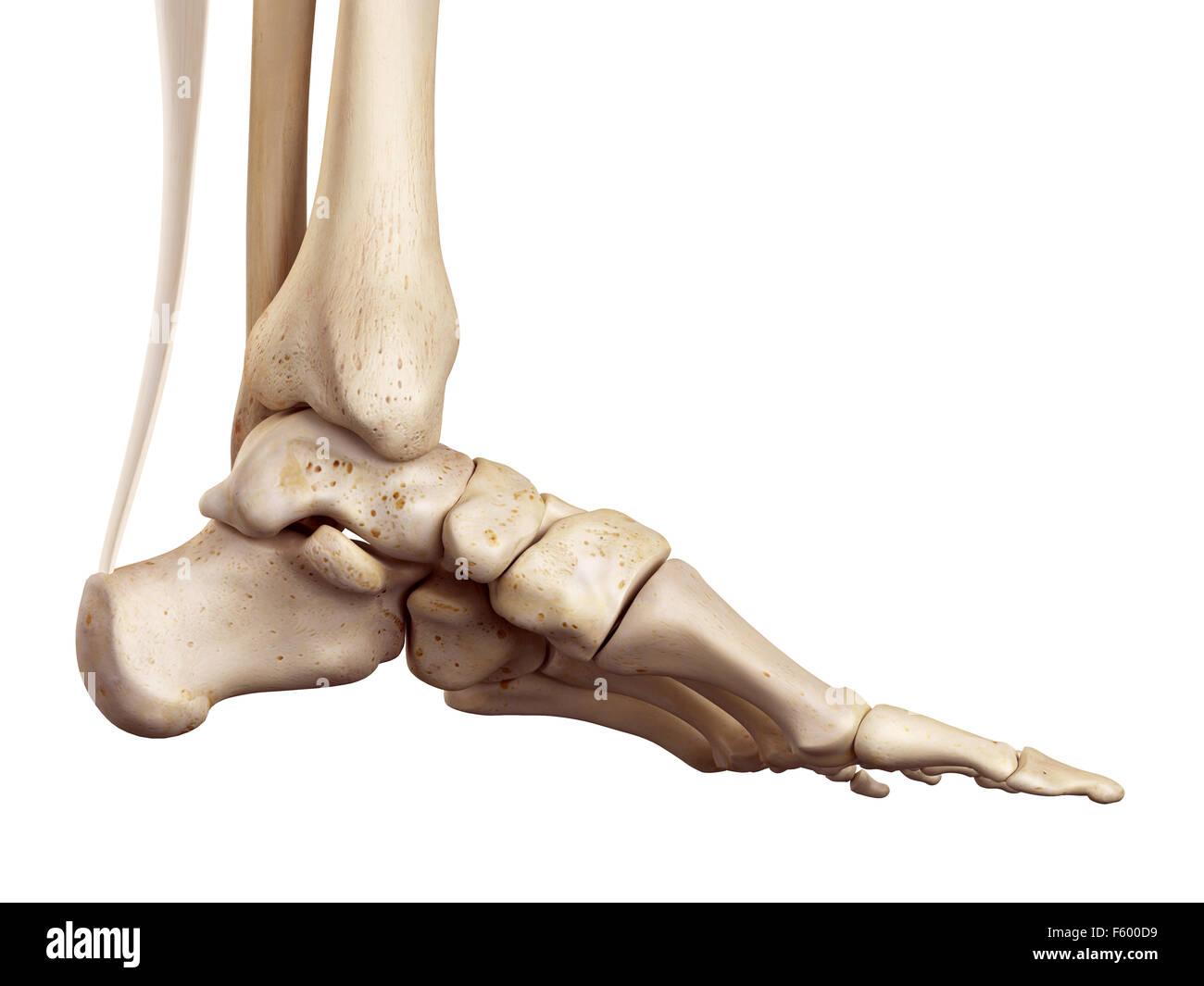 Toe Medical Stockfotos & Toe Medical Bilder - Alamy