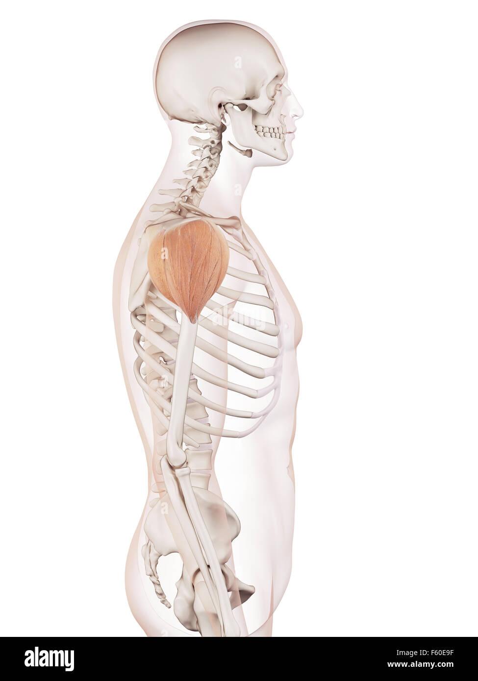 Atemberaubend Usmle Straßenkarte Anatomie Zeitgenössisch - Anatomie ...