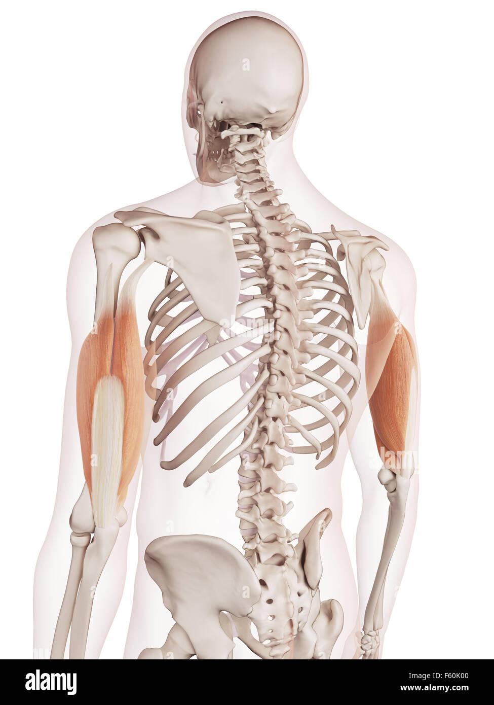 Atemberaubend Online Anatomie Und Physiologie Quiz Bilder - Anatomie ...