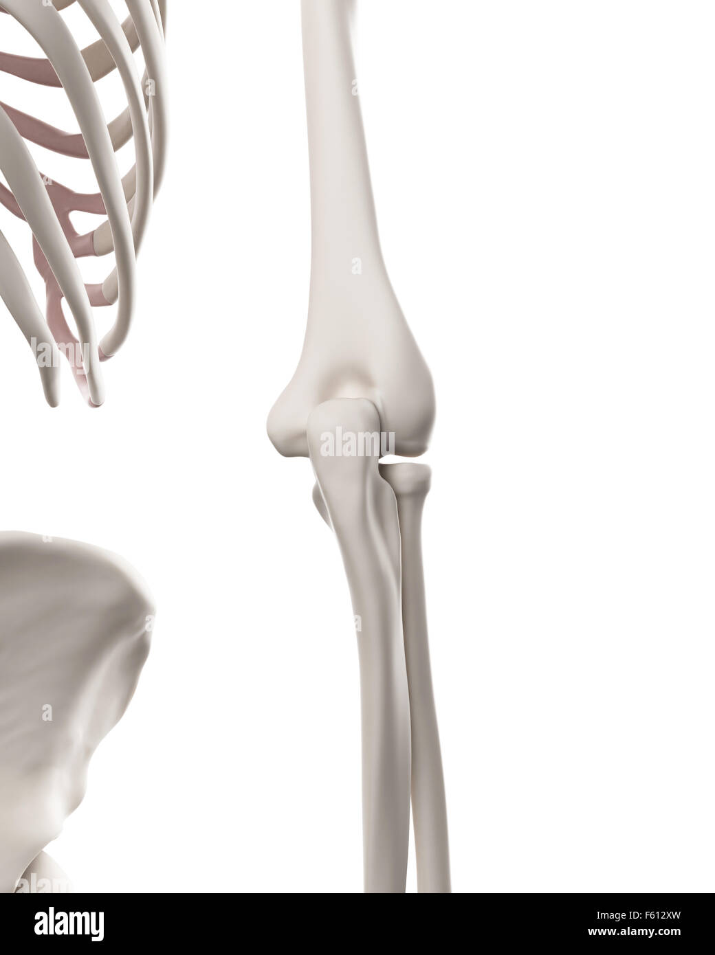 Ungewöhnlich Ellenbogen Xray Anatomie Ideen - Anatomie Ideen ...