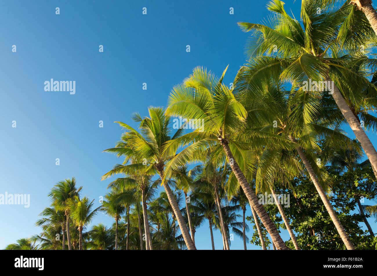 Palmen vor blauem Himmel Stockbild