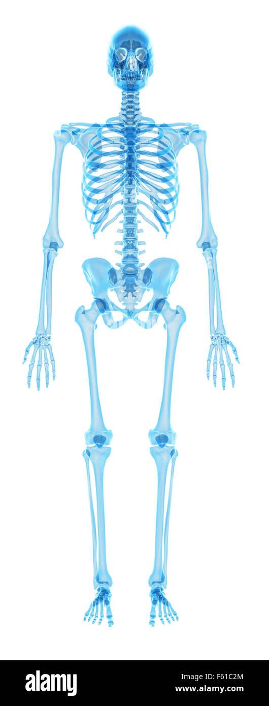 Groß Anatomie Des Halses Ideen - Anatomie Ideen - finotti.info