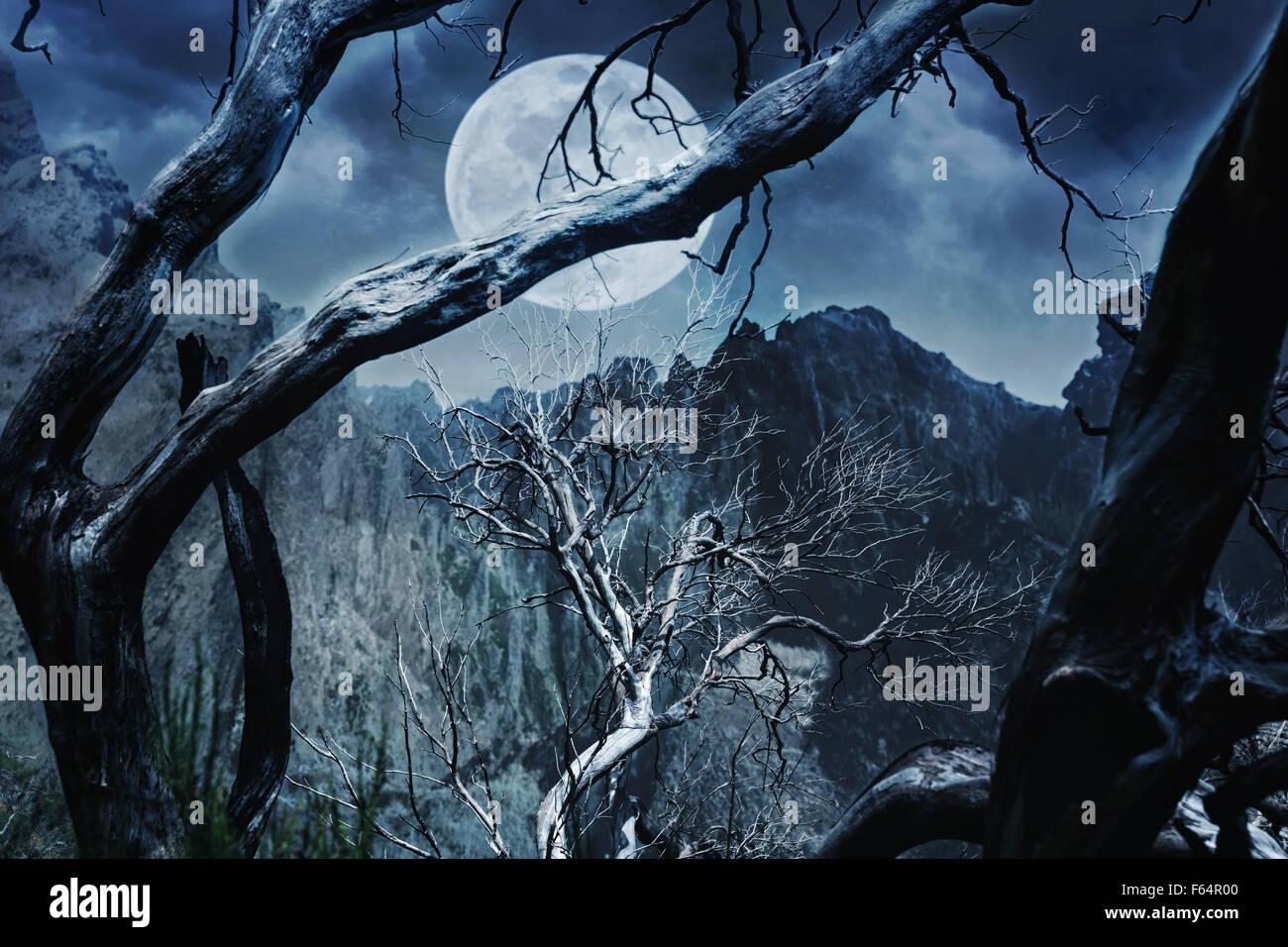Schrecklichen Wald in der Nacht in den Bergen Stockbild