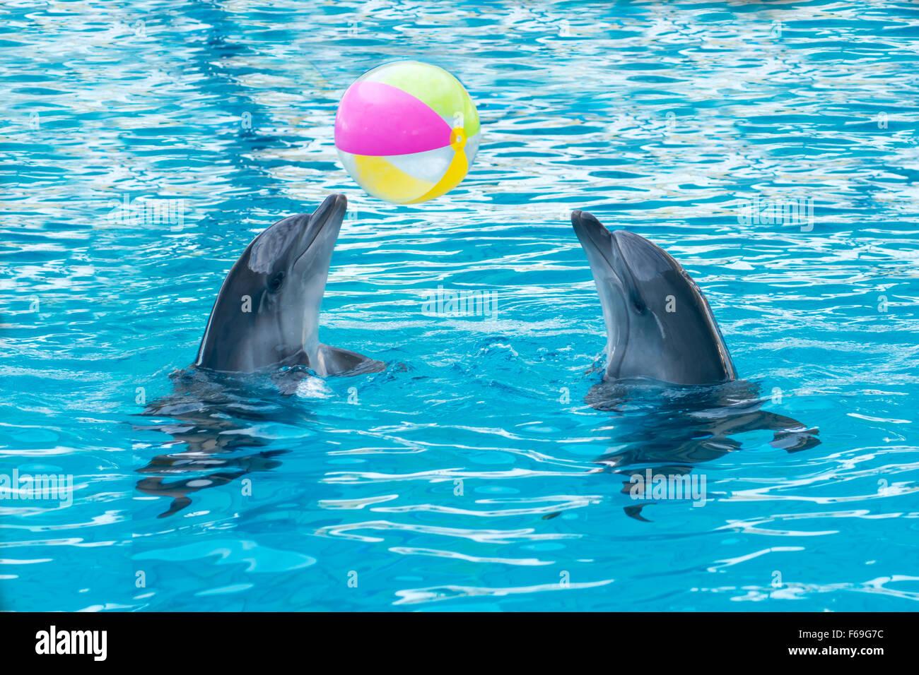 Delfine Spiele Kostenlos