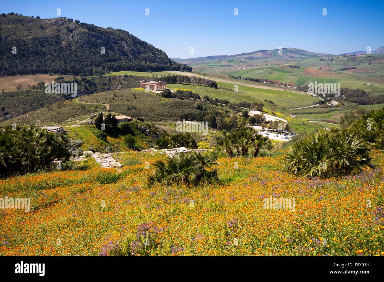 Blühende Blumen in der sizilianischen Landschaft, antike Stätte von Segesta, Sizilien, Italien Stockbild