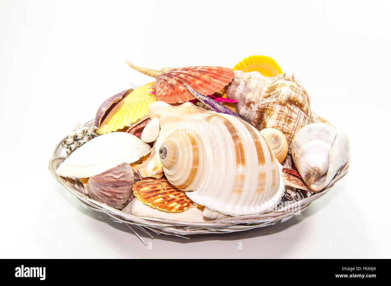 Muscheln und Seesterne Stockbild