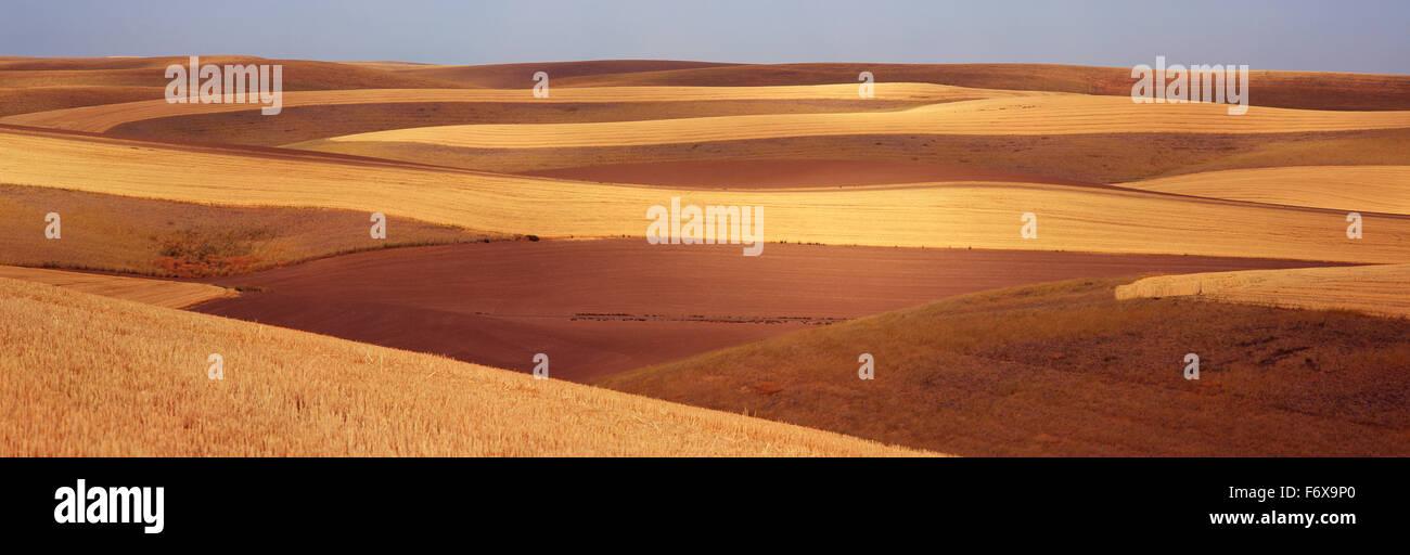 Kontur Felder mit Streifen von gepflügte Erde und geschnittene Getreide werden mit einem blauen Himmel im Hintergrund Stockbild