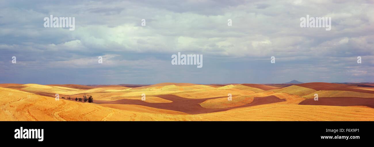 Kontur Felder mit Streifen von gepflügte Erde und geschnittene Getreide werden mit einem stürmischen Himmel Stockbild