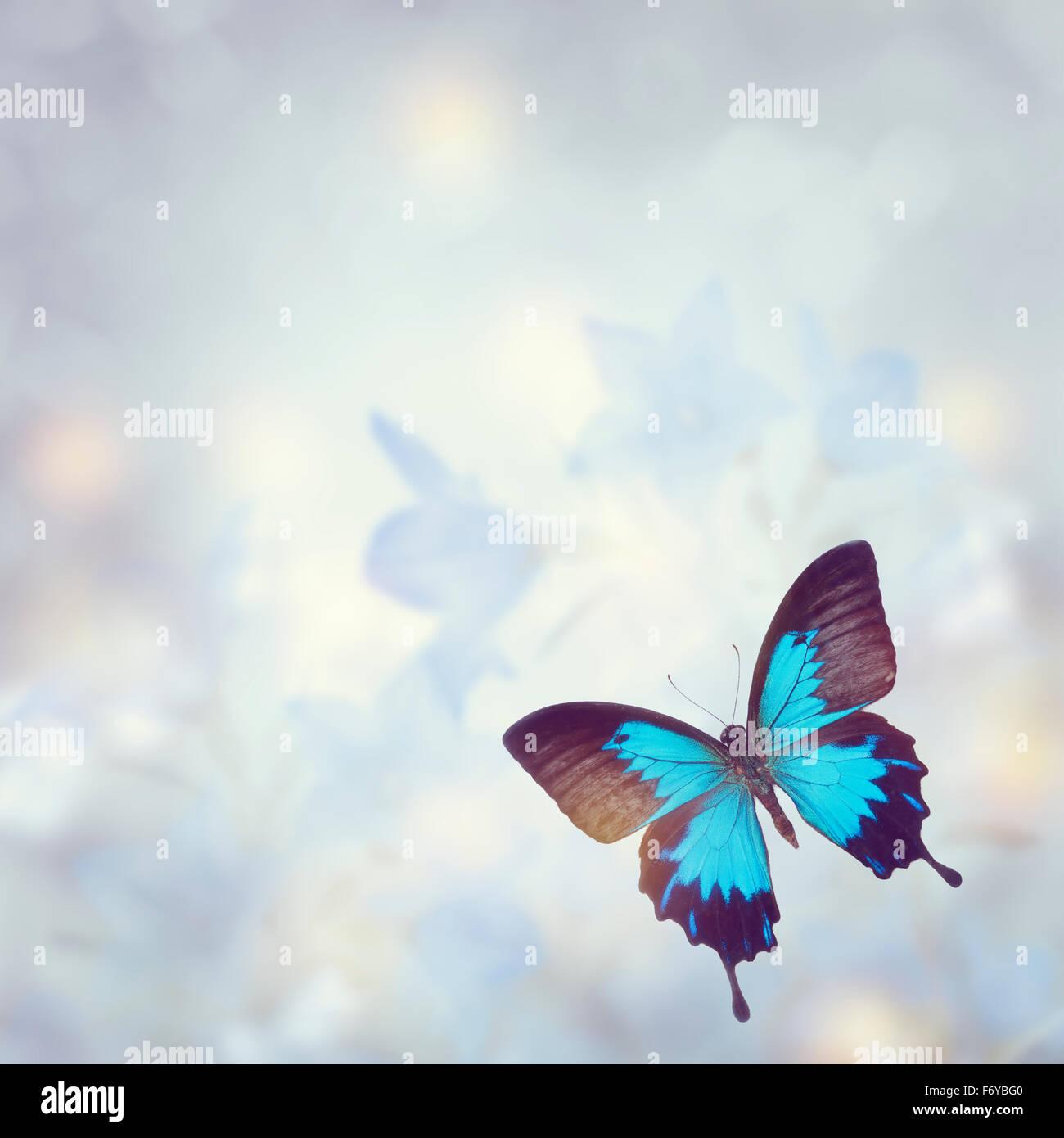 Blaue tropischer Schmetterling für Hintergrund Stockbild