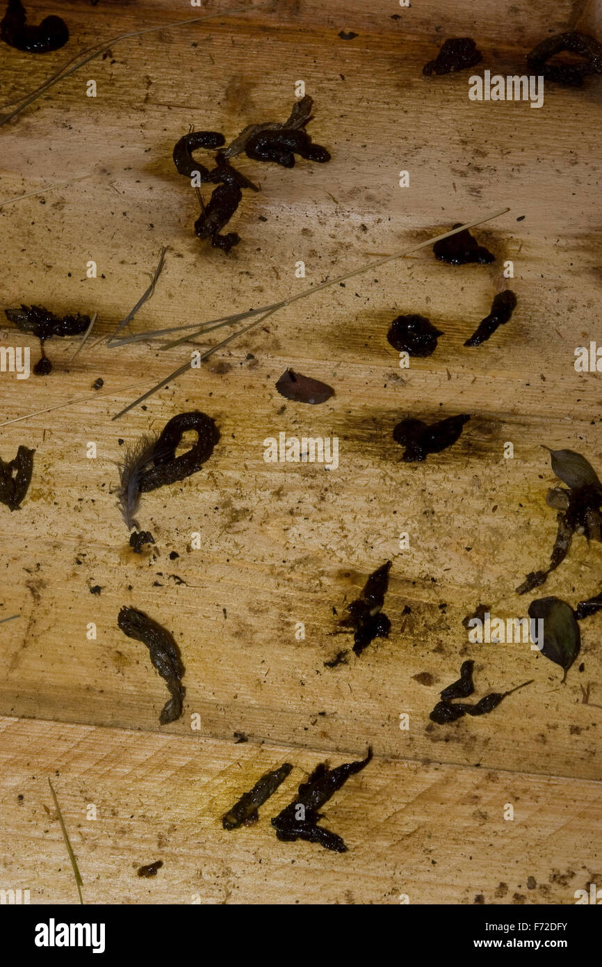 mammal droppings faeces stockfotos mammal droppings faeces bilder alamy. Black Bedroom Furniture Sets. Home Design Ideas