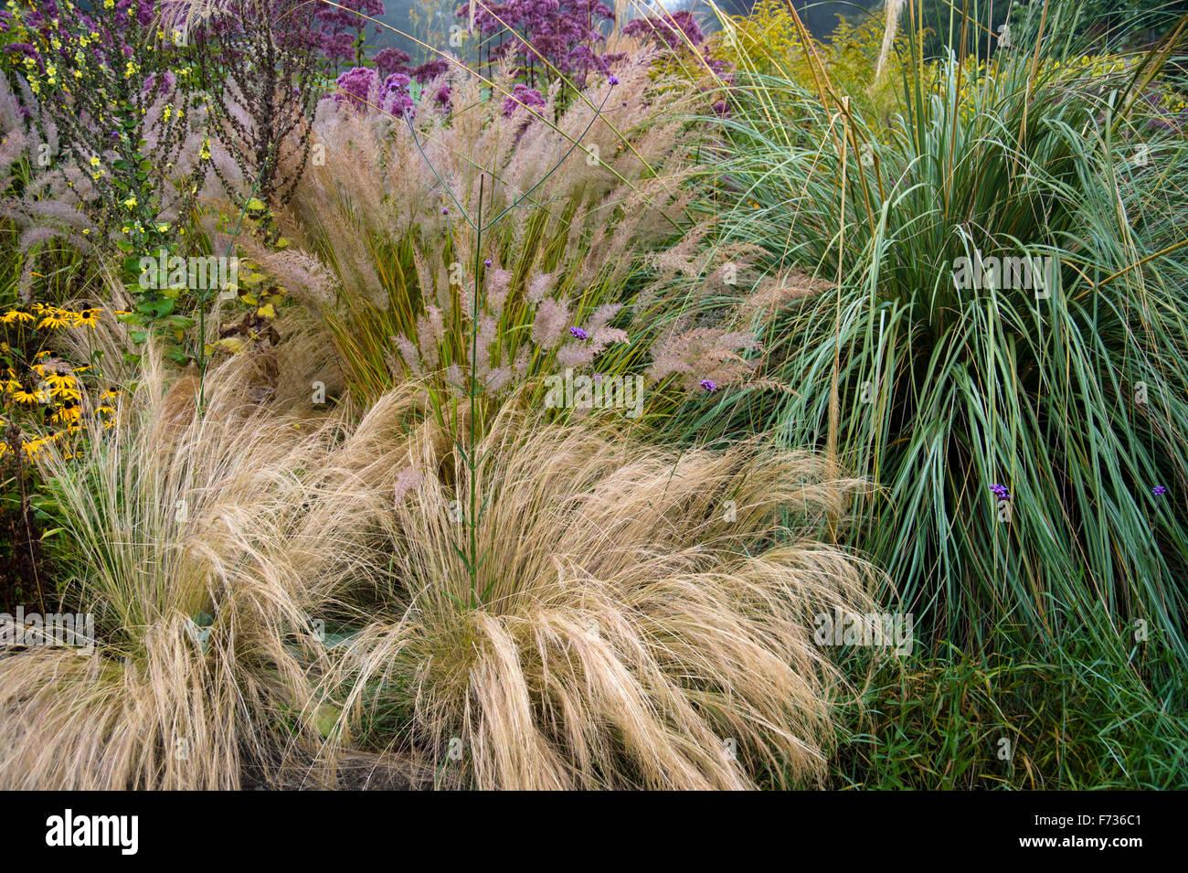Ziergräser Im Garten Bilder ziergräser im garten grenze im herbst stockfoto bild 90425329 alamy