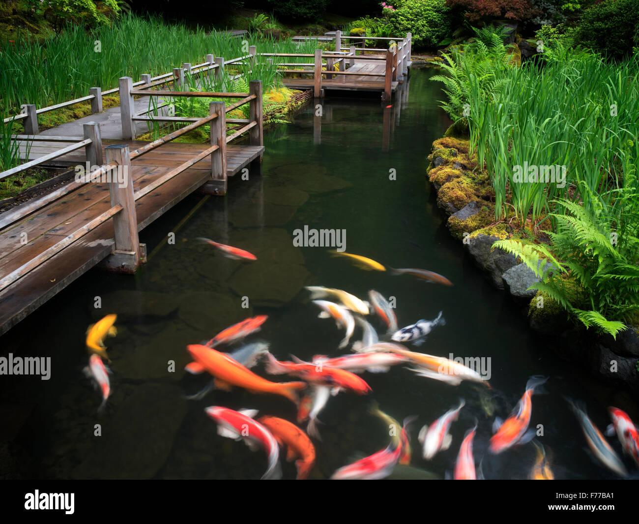 Koi und Iris Betten-Pfad. Japanische Gärten, Oregon Stockbild