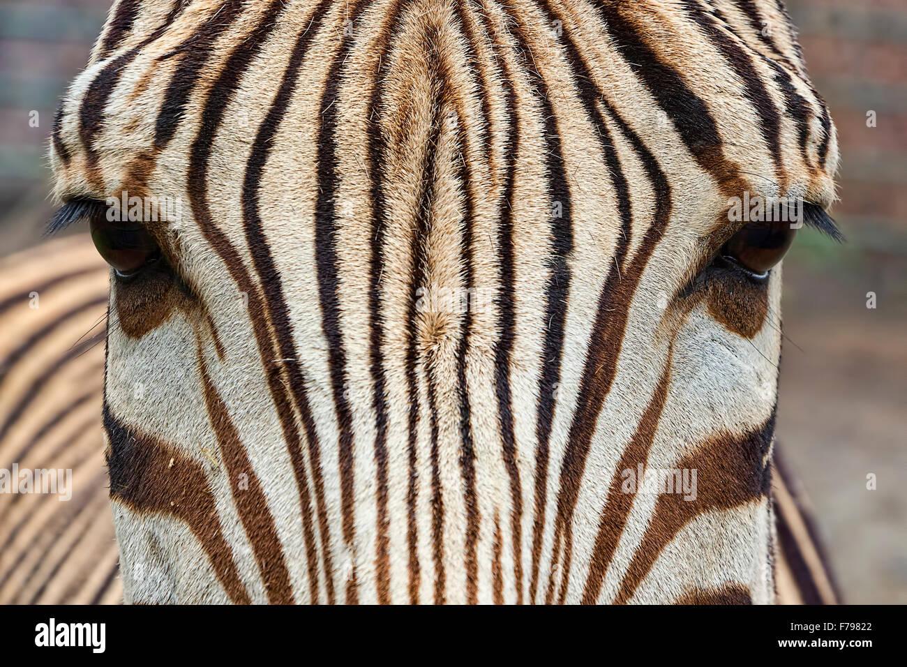 Tolle Zebra Einladungsvorlage Ideen - Beispiel Business Lebenslauf ...