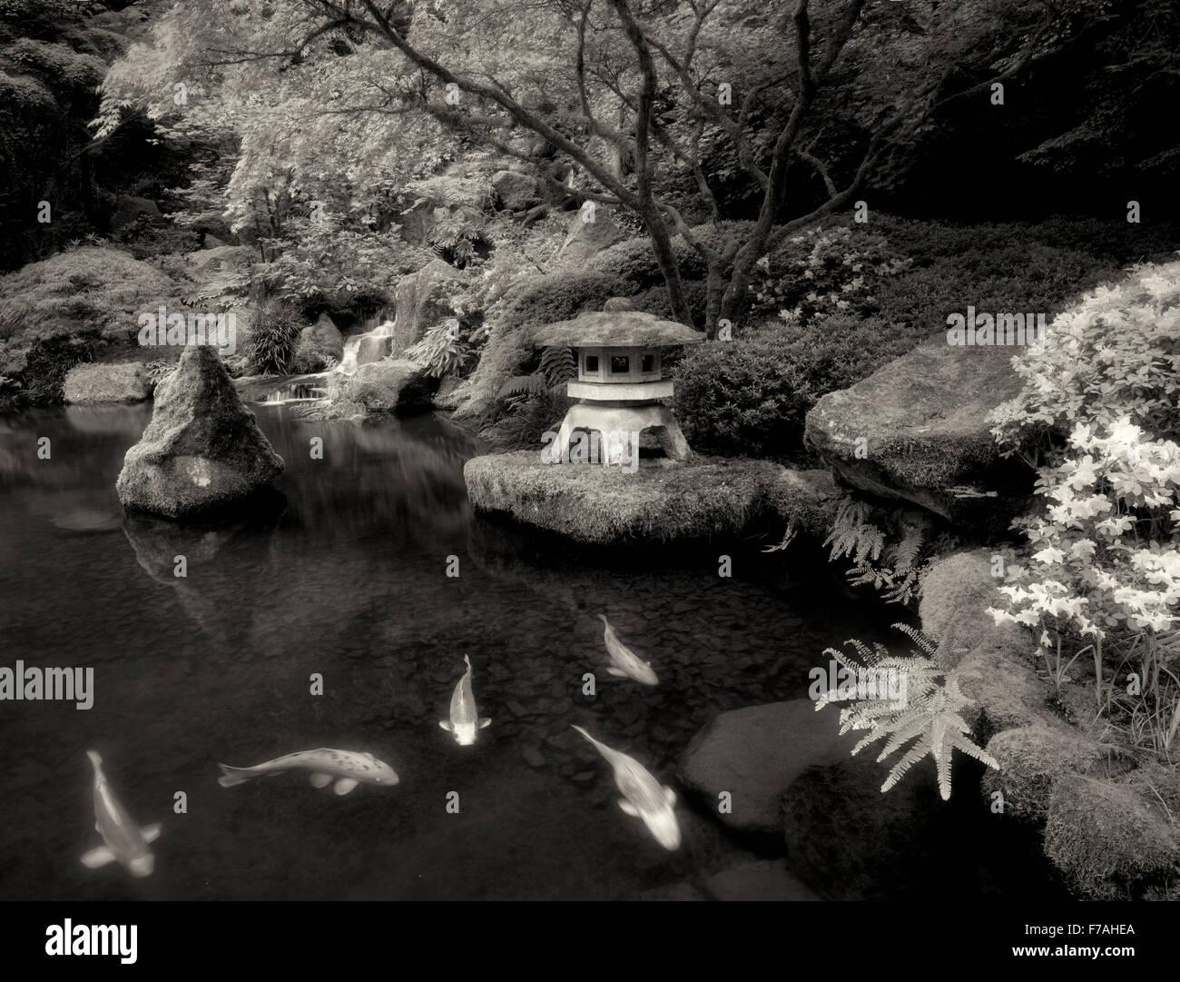 Koi im Teich mit japanische Laterne und Wasserfällen. Japanische Gärten. Portland, Oregon Stockbild