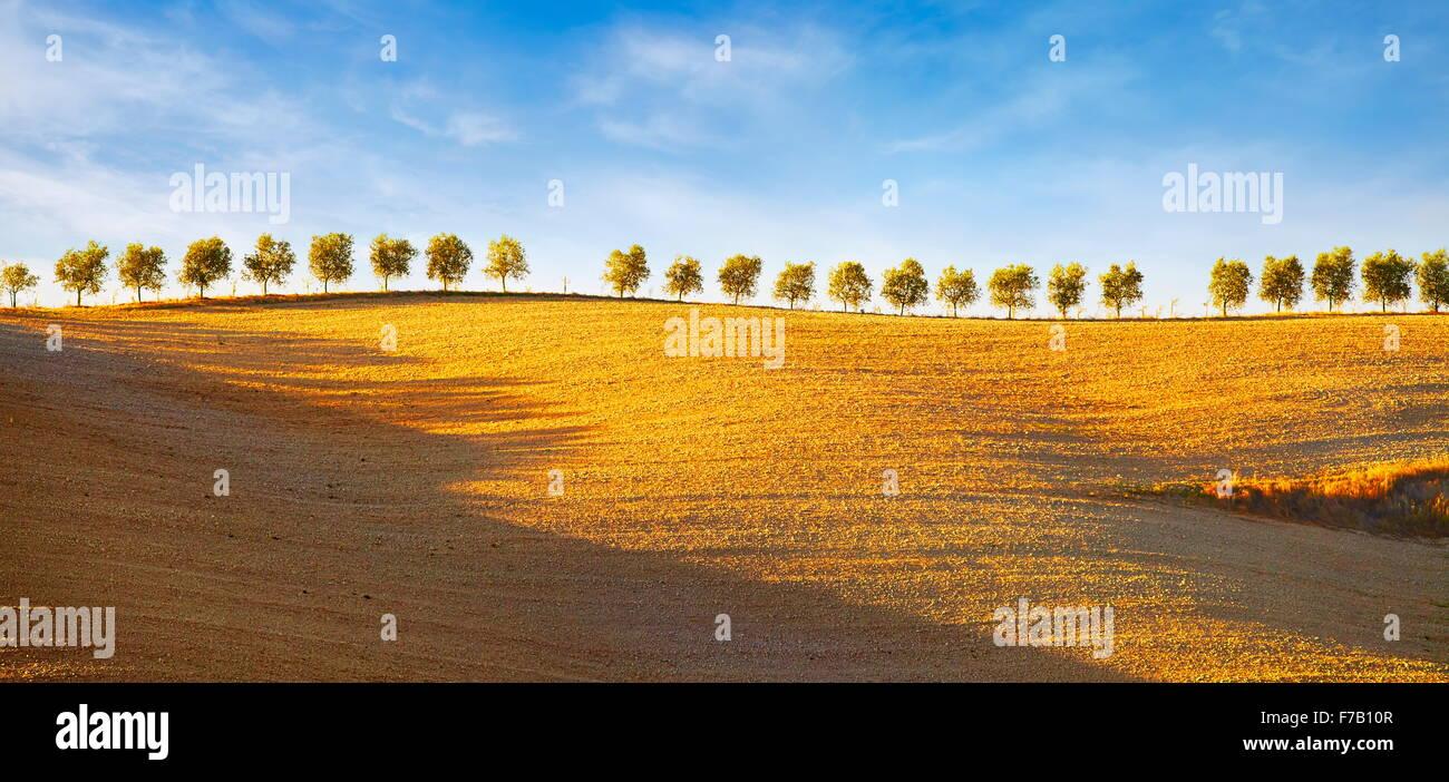 Reihe von Bäumen, Val d ' Orcia, Toskana, Italien Stockbild