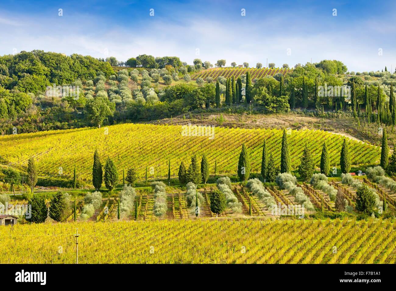 Weinberg, Toskana Italien Stockbild