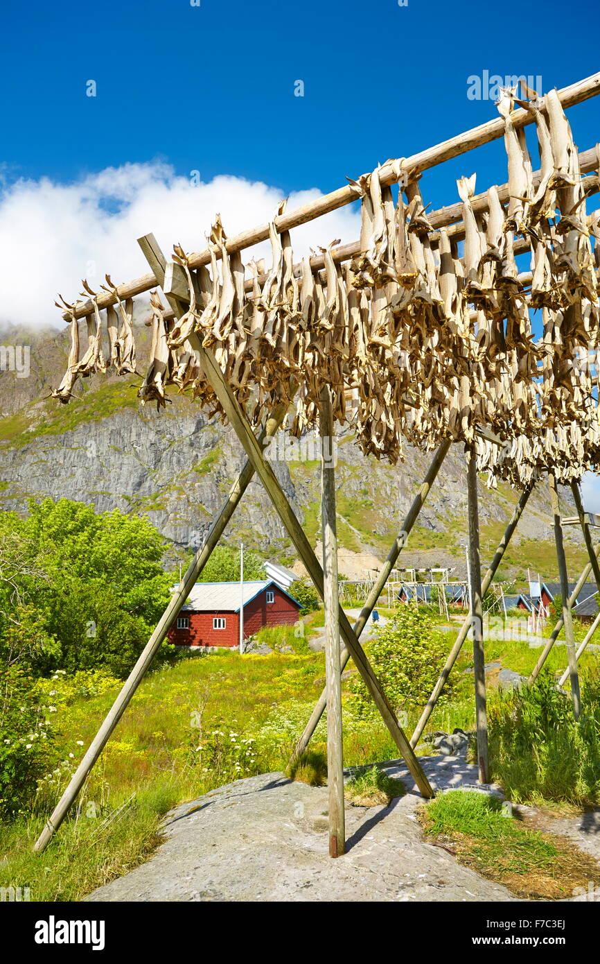 Trocknung von Stockfisch, Lofoten Inseln, Norwegen Stockbild