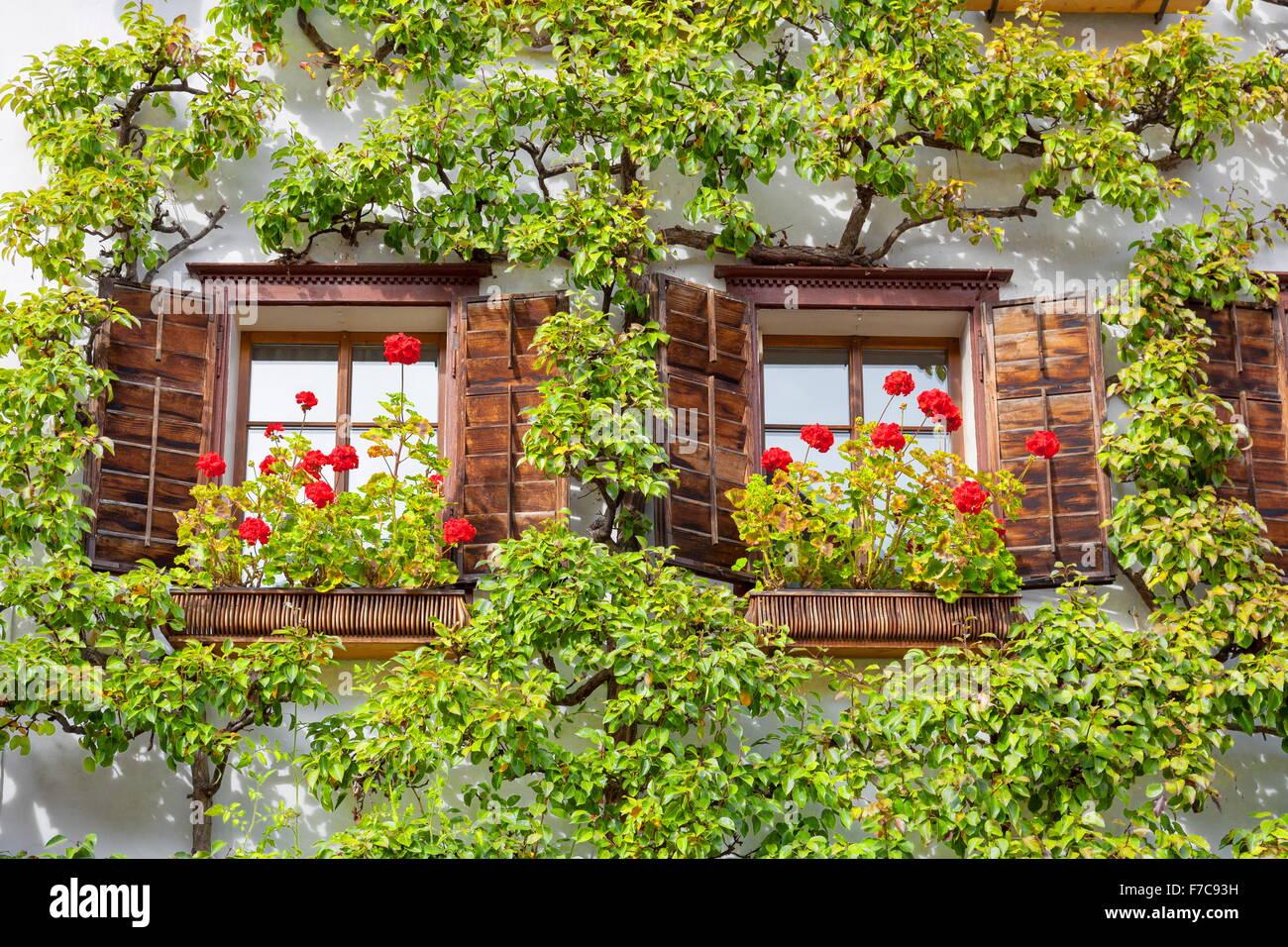 Fenster mit Blumen, Hallstatt, Salzkammergut, Österreich Stockbild