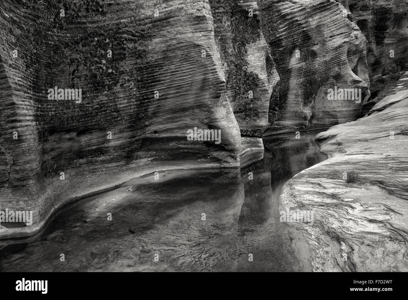 Saisonale Bachbett mit Wasser und Reflexion. Zion Nationalpark, UT Stockbild