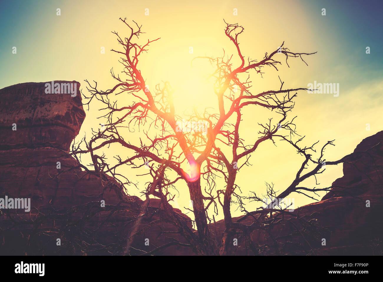Vintage getönten Silhouette eine einsame trockenen Baum bei Sonnenuntergang, Vergehen der Zeit Konzept Bild. Stockbild