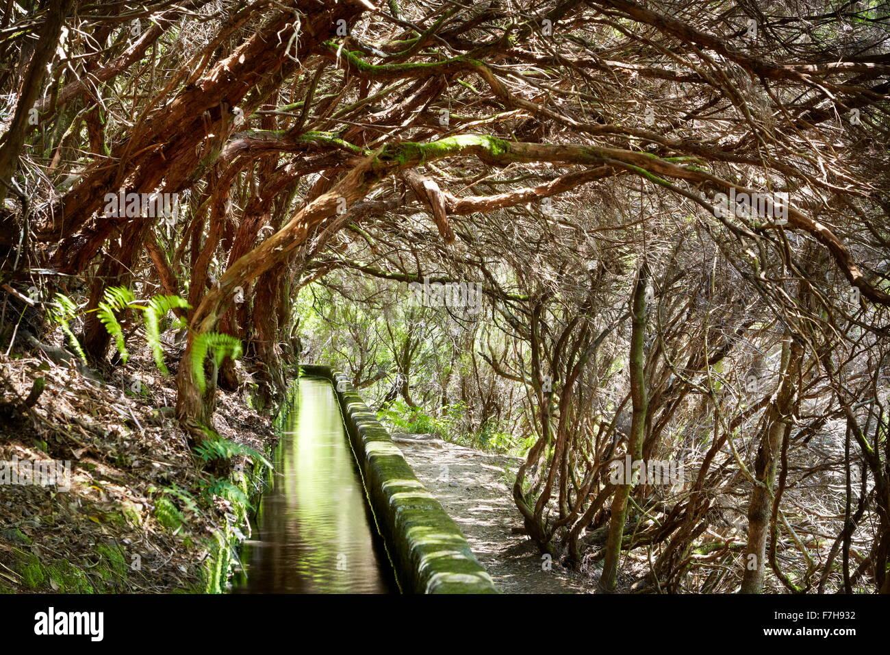Levada Das, die Kanal 25 Fontes, Lorbeerwald und Bewässerung, die rabacal, Insel Madeira, Portugal Stockbild