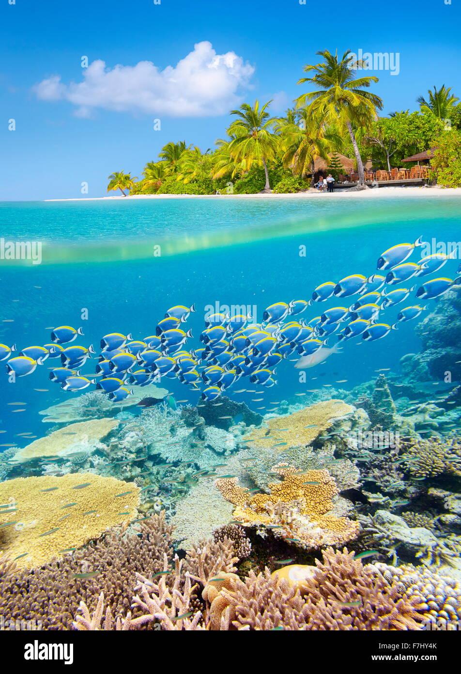 Malediven Insel - tropischen Unterwasser-Blick mit Riff Stockbild