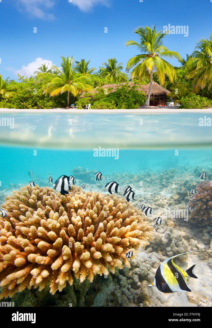 Tropischen Strand und Unterwasser-Blick mit Riff und Fisch, Malediven-Insel Stockbild