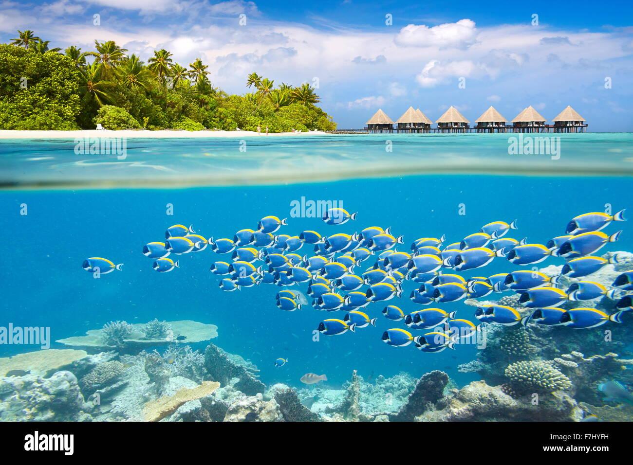 Malediven Insel - Unterwasser-Blick mit Fischschwarm Stockbild