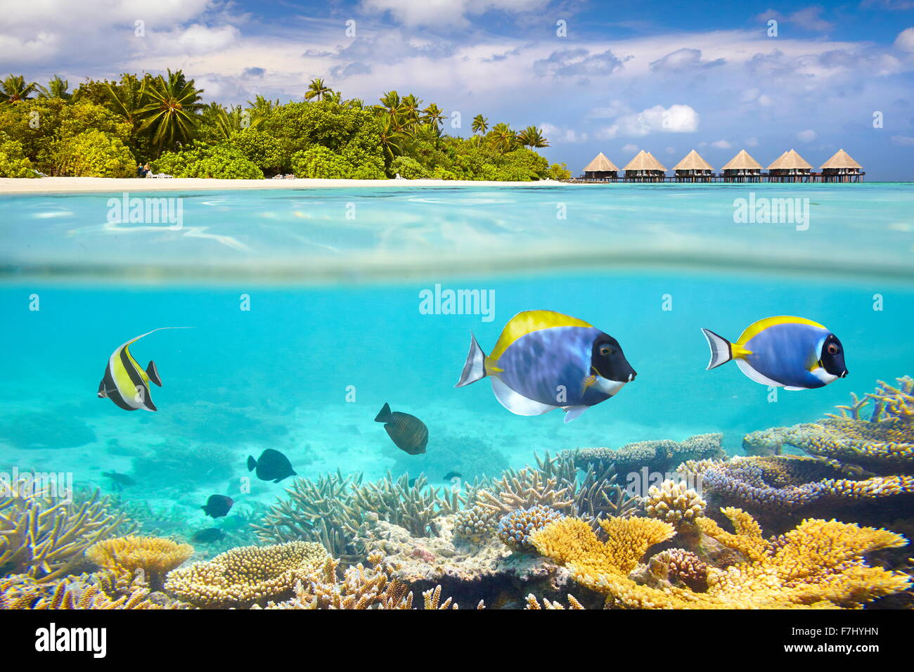 Malediven Insel - Unterwasser-Blick mit Riff und Fisch Stockbild