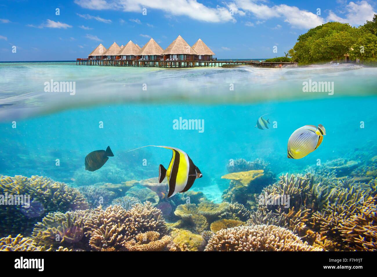 Malediven Insel - Unterwasser-Blick mit Fisch Stockbild