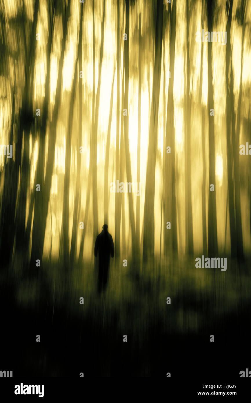 Geheimnisvolle Gestalt im unheimlichen Wald Stockbild