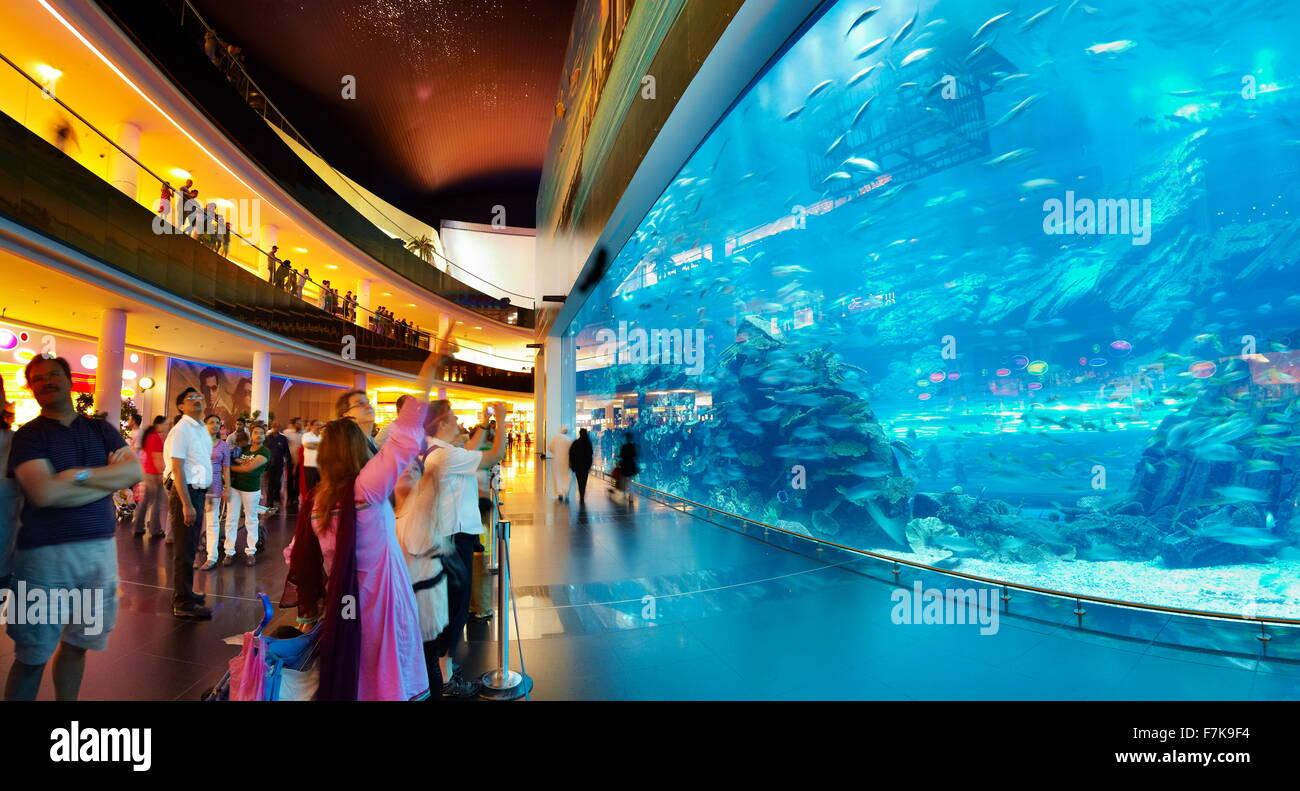 Die Dubai Mall Aquarium, Dubai, Vereinigte Arabische Emirate, Naher Osten Stockbild