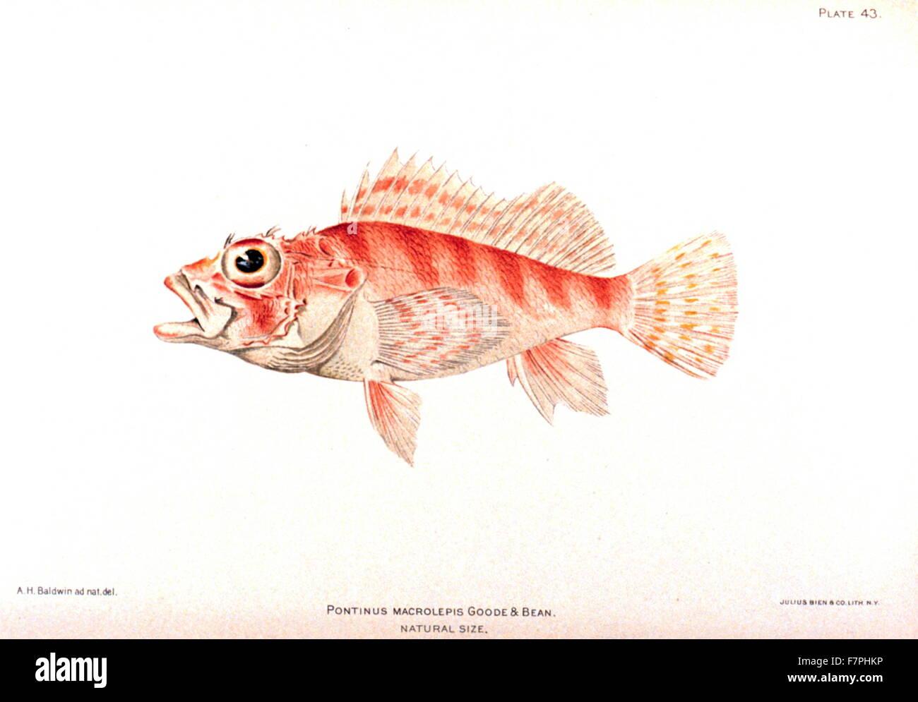 Viele Fische datieren Website sicher skype dating India