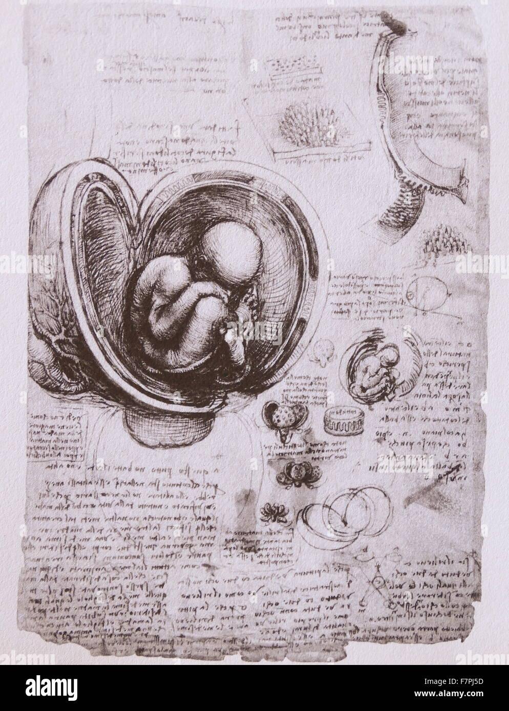 Anatomische Skizze von Leonardo Da Vinci (1452-1519) italienischer ...