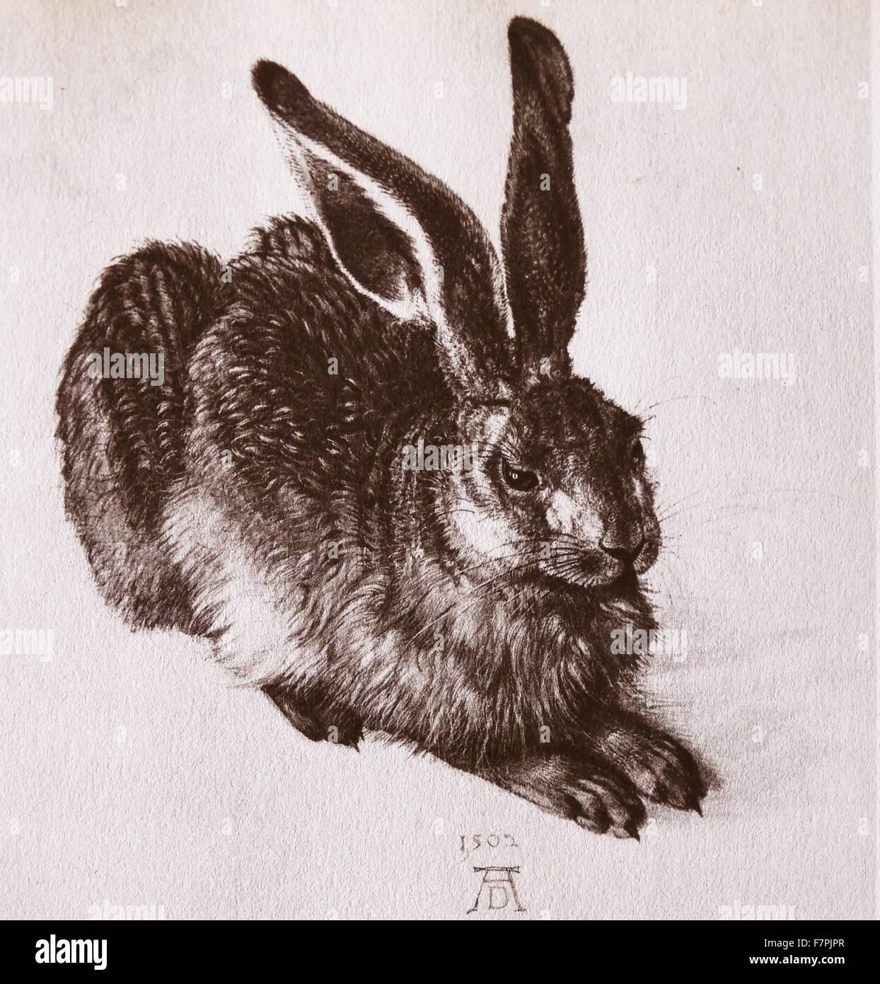 Aquarell eines jungen Hasen von Albrecht Dürer (1471-1528) Maler, Grafiker und Theoretiker der deutschen Renaissance. Stockbild
