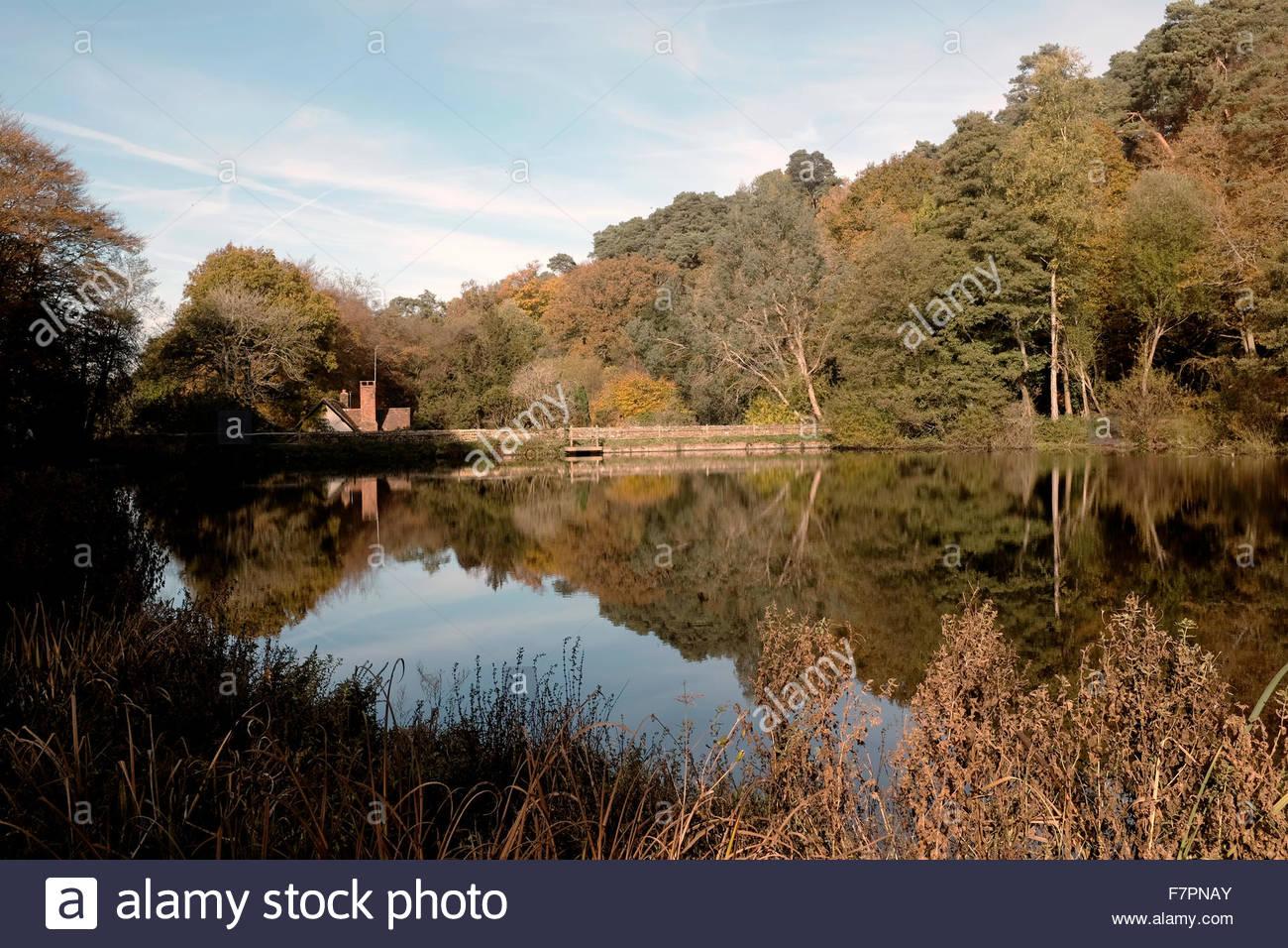 Hammer-Teich Abinger nahe Dorking Surrey, England UK. Stockbild