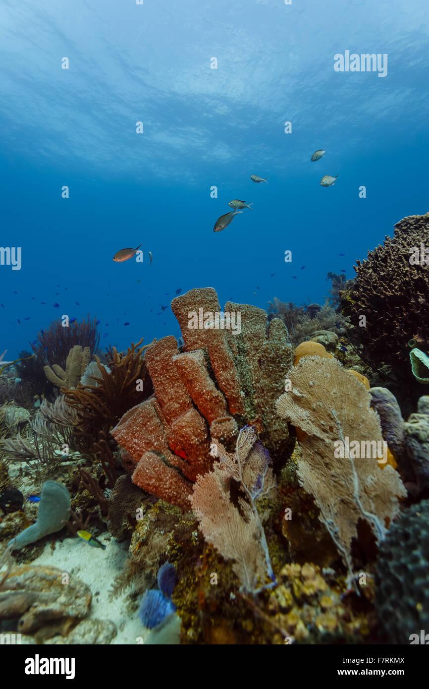 Colorful Underwater Life Sponges Marine Stockfotos & Colorful ...