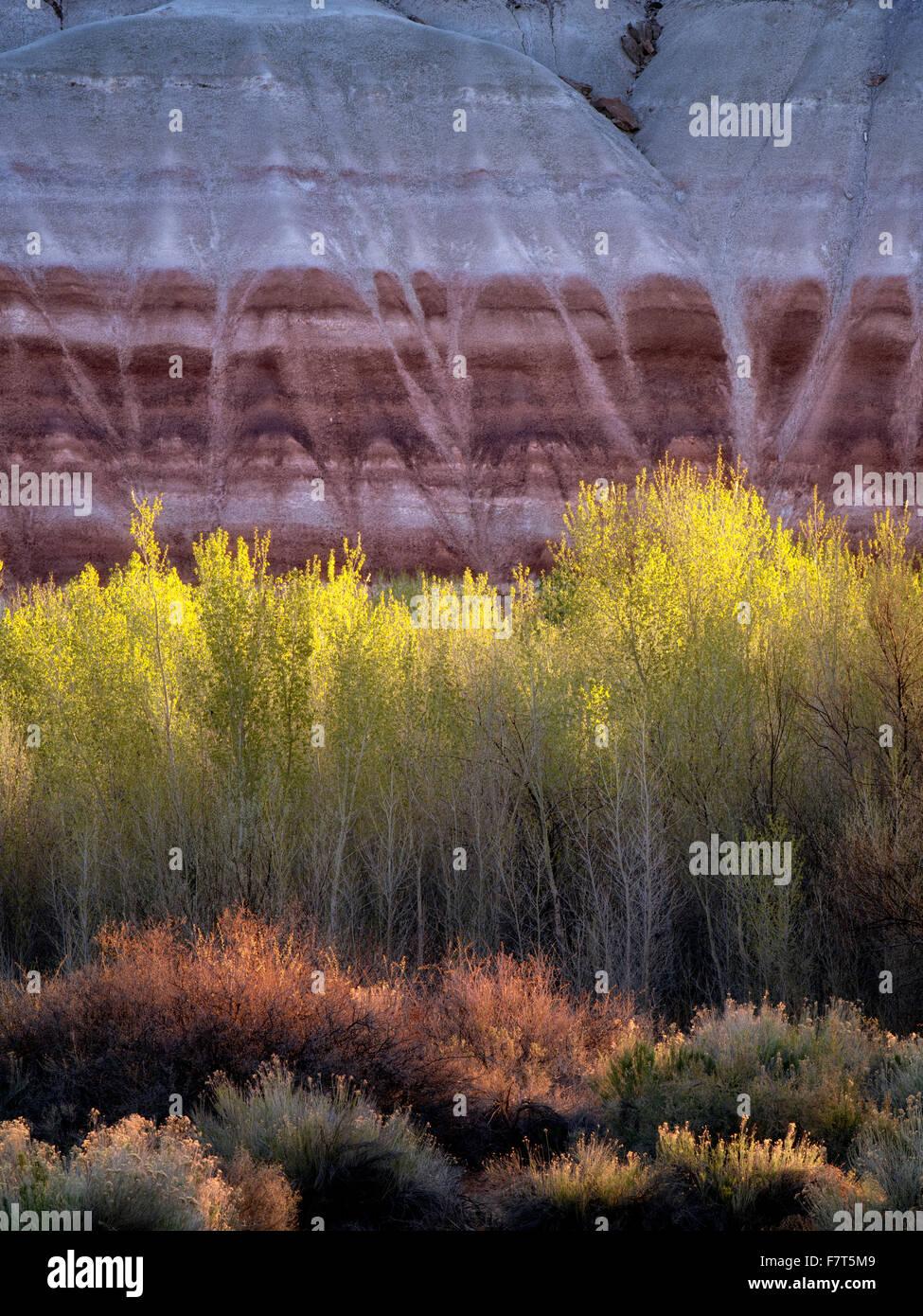 Pappeln und bunten Klippen. Capitol Reef National Park, Utah Stockbild