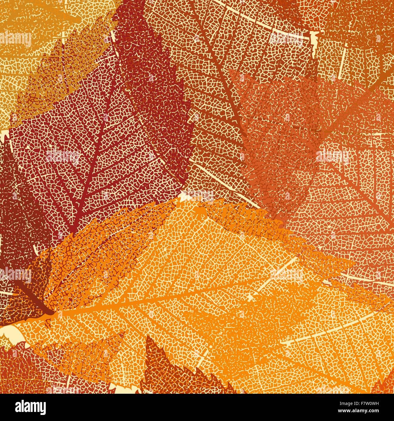 Skeleton Leaf Background Stockfotos & Skeleton Leaf Background ...