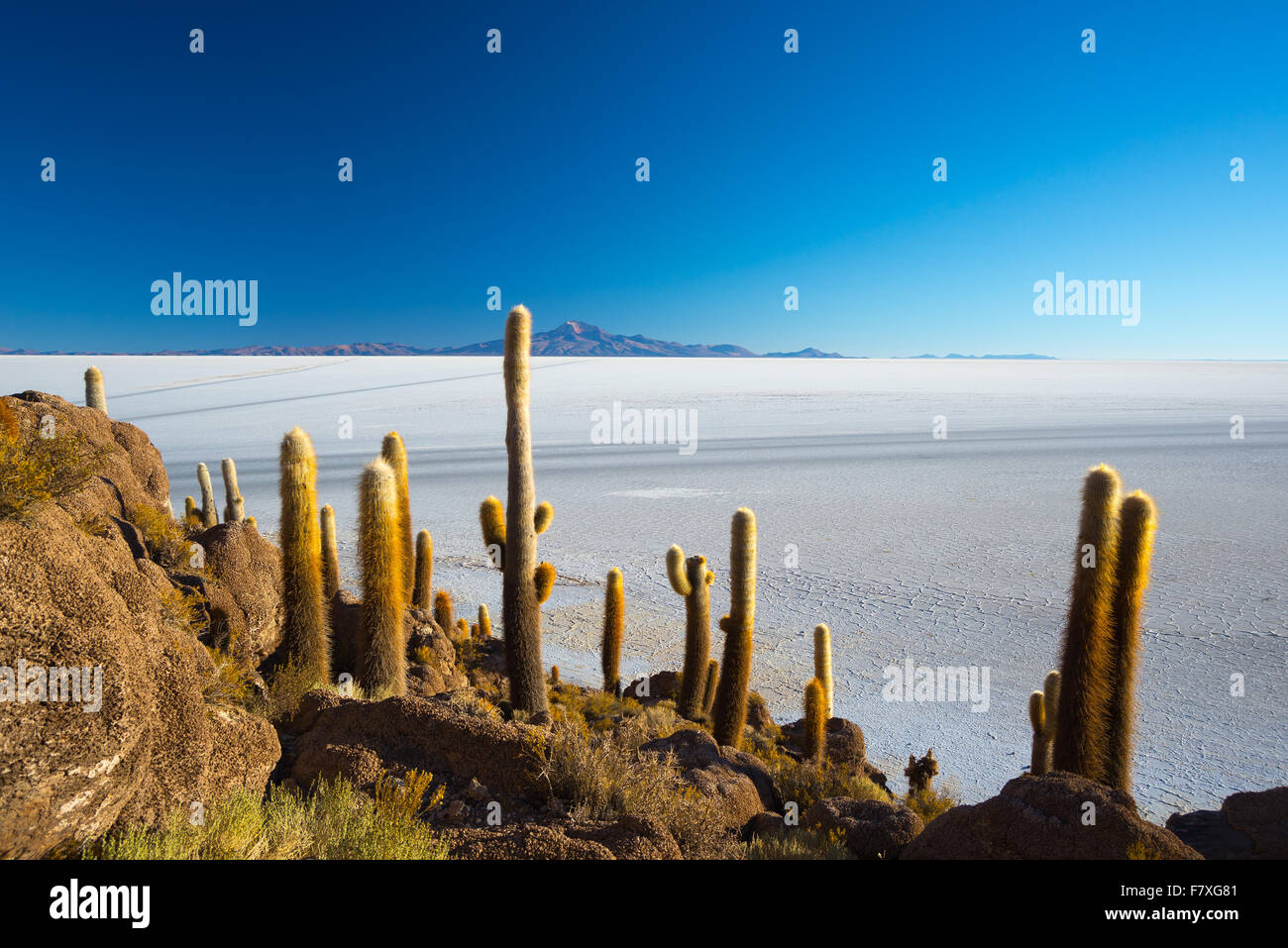 Weitwinkel-Blick auf die Uyuni Salz flach, unter das wichtigste Reiseziel in Bolivien. Schuss getroffen bei Sonnenaufgang Stockbild