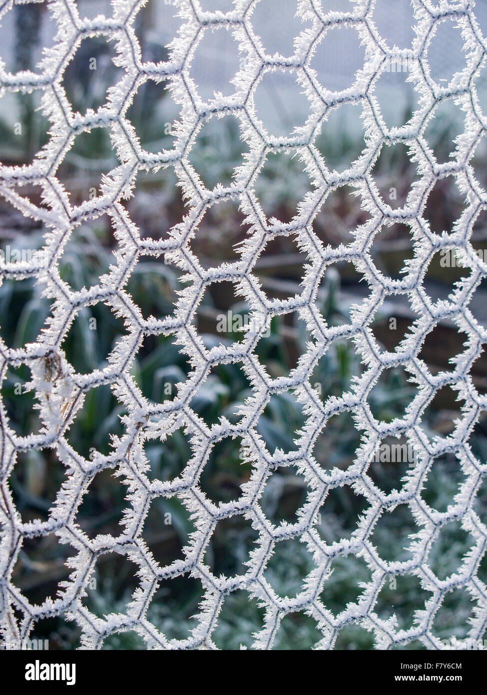 Metall Zäune Maschendraht/Vieh bedeckt in dickem Eis und Raureif ...