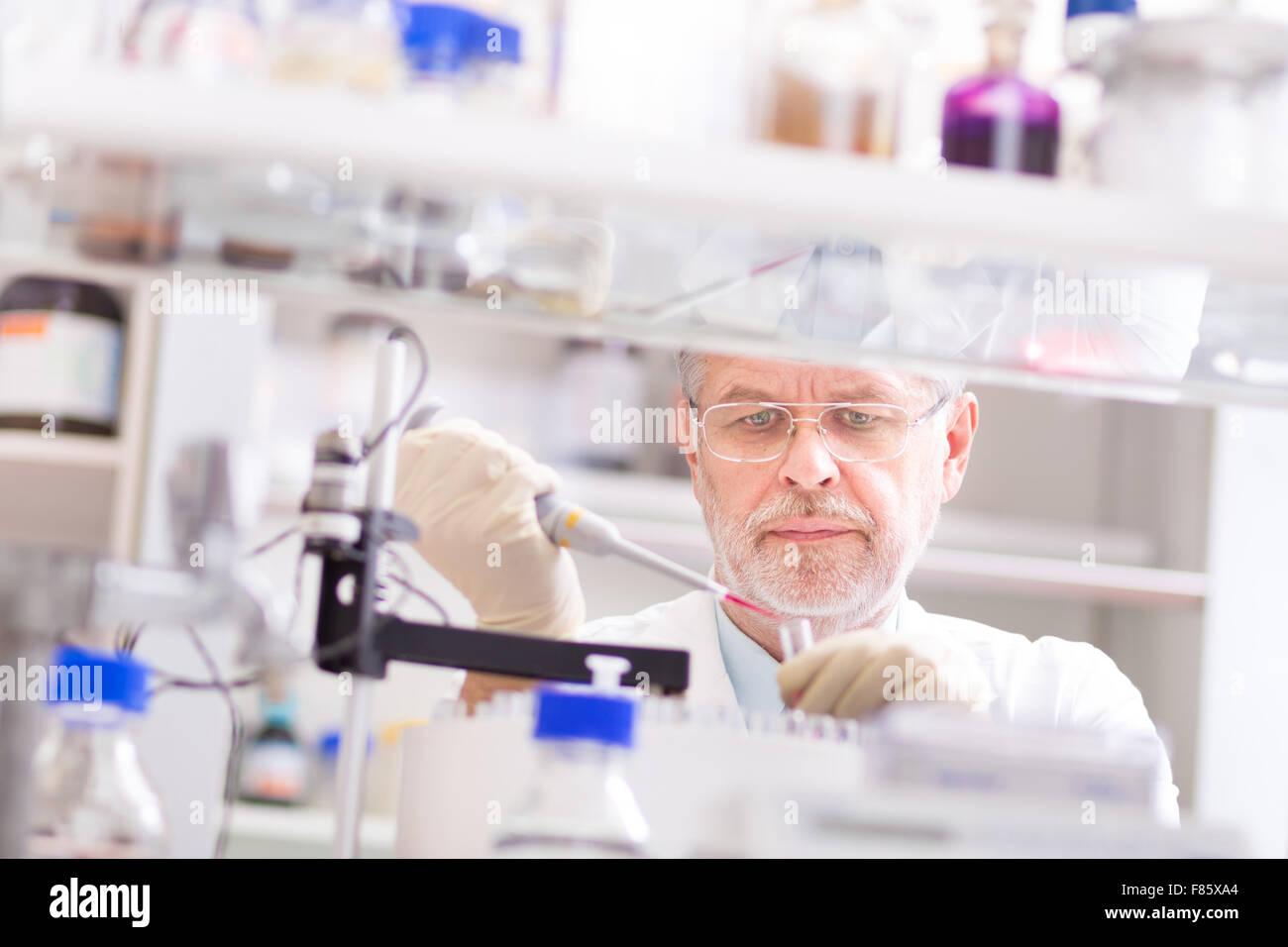 Lebens-Wissenschaftler forschen im Labor. Stockbild