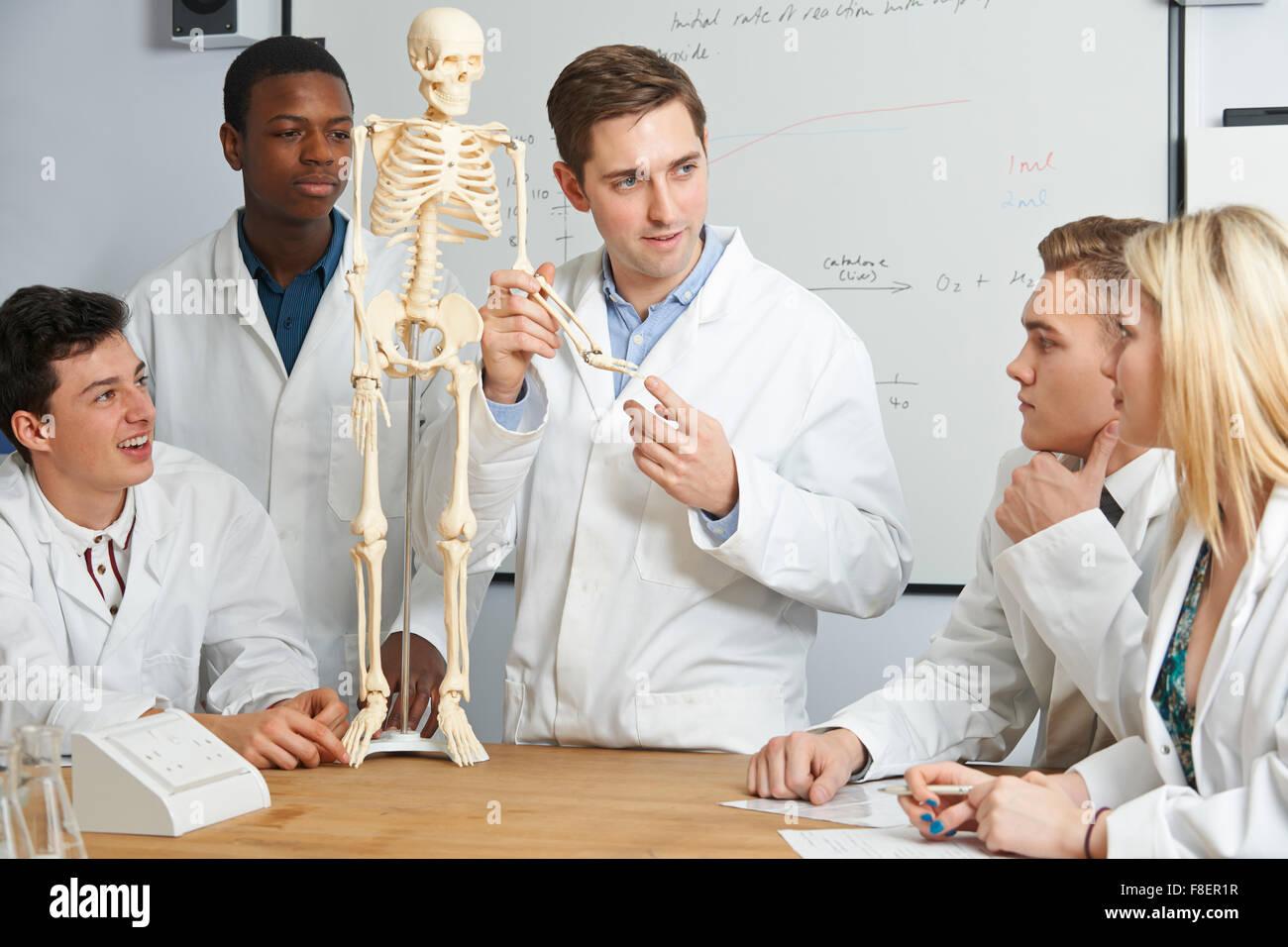 Lehrer mit Modell des menschlichen Skeletts im Biologieunterricht Stockbild