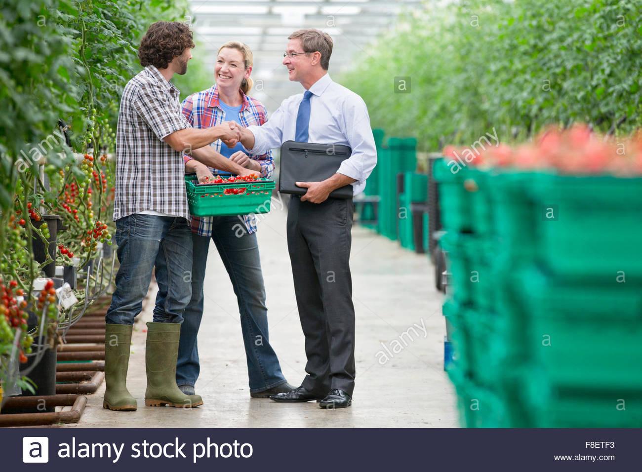 Geschäftsmann und Züchter mit Kiste Handshaking Tomaten im Gewächshaus Stockbild