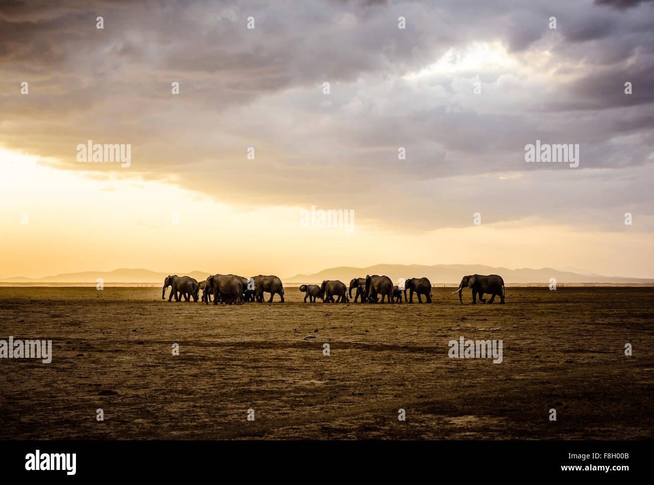 Herde von Elefanten in der Savannenlandschaft Stockbild