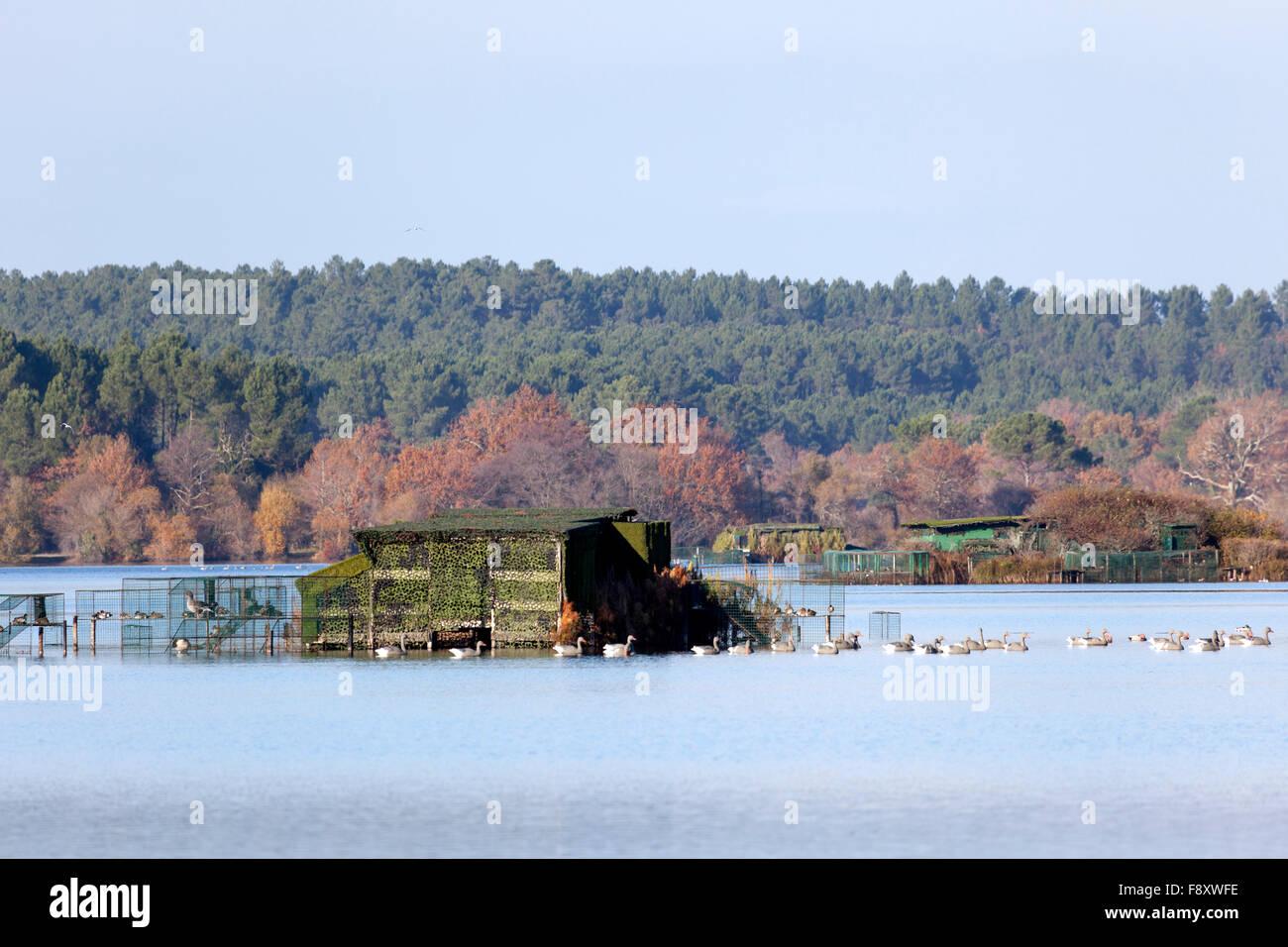 Im Herbst inmitten von einem Dutzend anderer, eine Ente Jagd-Hütte auf dem weißen Teich in Seignosse (Landes Stockbild