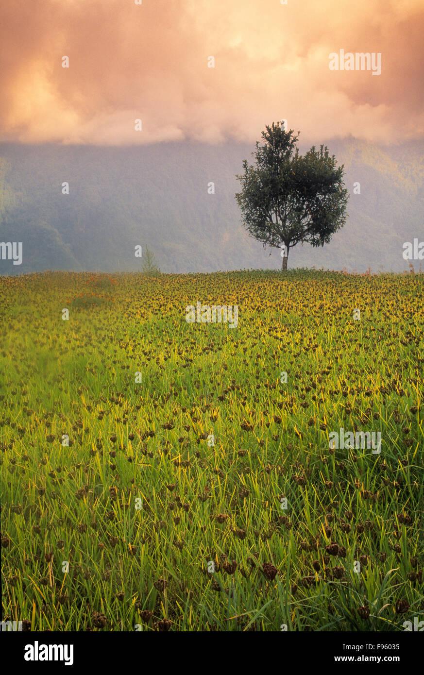 Ackerland auf dem Annapurna Circuit, Nepal Stockbild
